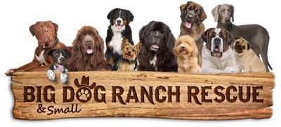 BDRR-Logo-Wood-Panel-Dogs